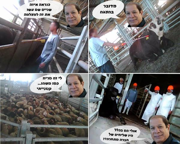 תמונות נבחרות מהחקירה של תנובה שמראות את האבסורדיות בדבריו של שייקה לוי שמפרסם את אדום אדום